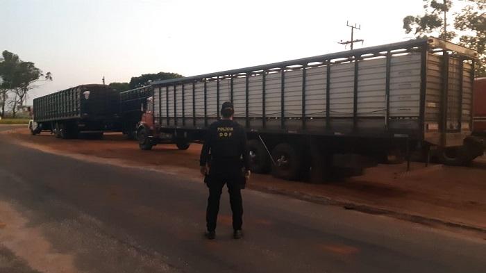 Vídeo: Ponta Porã: DOF apreende 120 bovinos trazidos ilegalmente do Paraguai