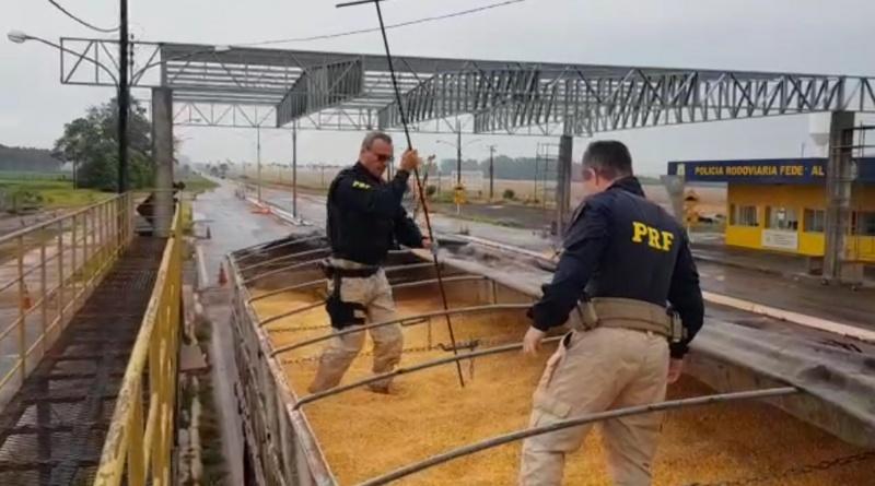 Vídeo: Em Ponta Porã, PRF apreende 11 toneladas de maconha sob carga de milho