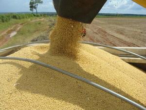 Grande parte da exportação de soja feita por MS foidestinada a China (Foto: Anderson Viegas/G1 MS)